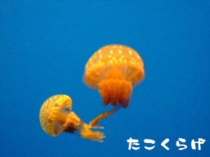 2007_09100094.jpg