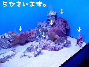 2007_09100155-1.jpg