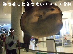 2007_09100161.jpg
