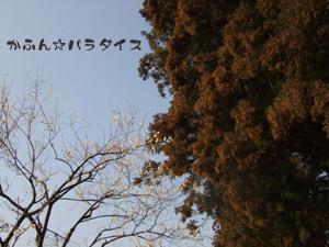 DSCF4833.jpg
