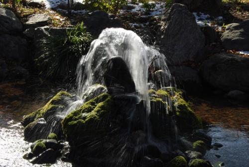 今宮神社内の池