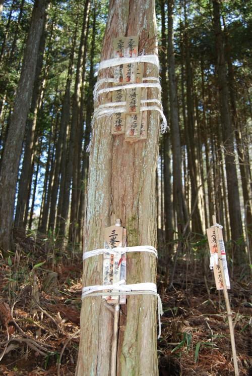 木に張られた御札