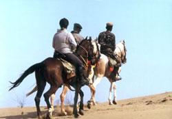 horsesafari-2.jpg