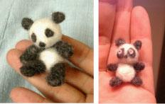 panda2-3.jpg