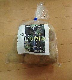 成木のジャガイモ