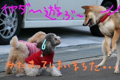 IMG_0974hphp.jpg