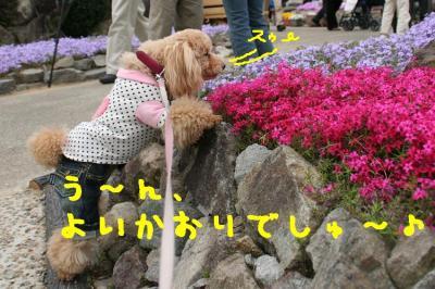 IMG_4095hp.jpg