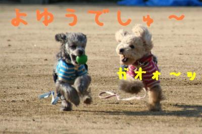 IMG_4247hp.jpg