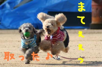 IMG_4383hp.jpg