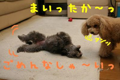 IMG_4626hp.jpg