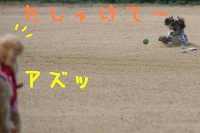 IMG_5546hp.jpg