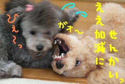 IMG_7714hp.jpg