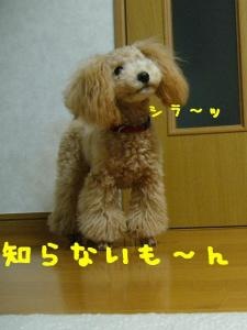 P1080465hp.jpg