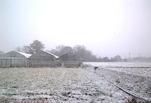 kagawa_snow.jpg