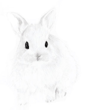 drawing-rabbit045.jpg
