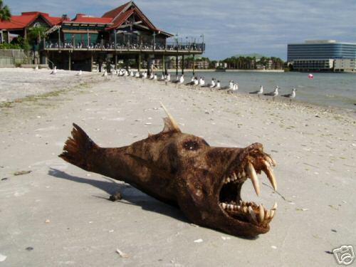 妖怪 狼魚