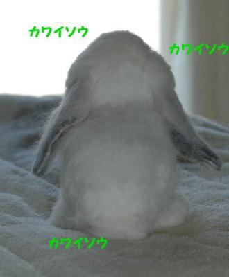 20070502163821.jpg