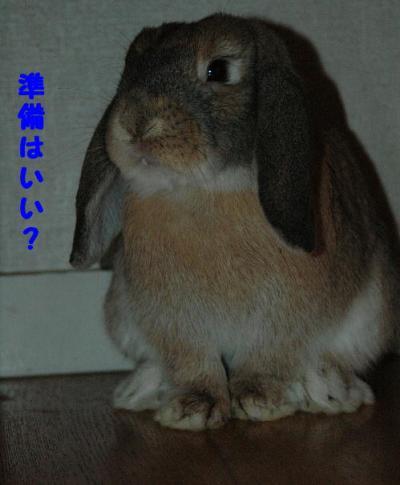 DSC_0020b.jpg