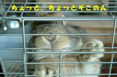 DSC_0363bb.jpg