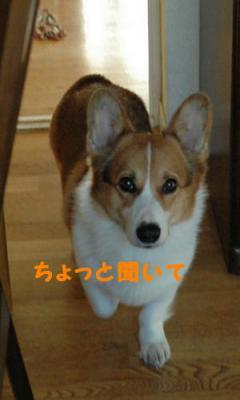 DSC_0414b.jpg