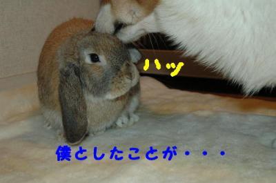 DSC_0455b.jpg