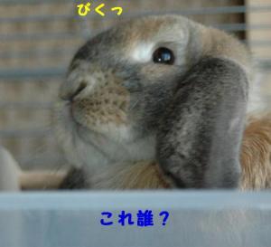 DSC_0493b.jpg