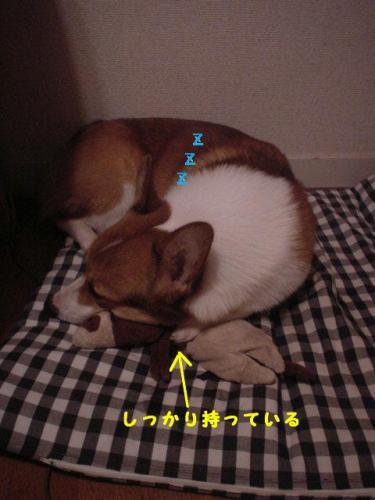 PHOTO024b.jpg