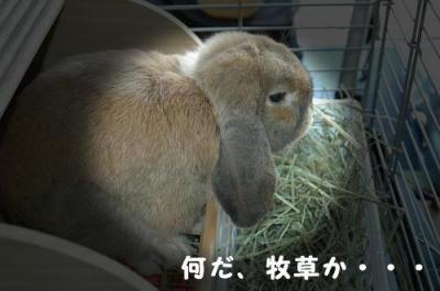 PHOTO032ab.jpg