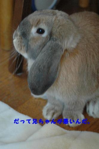 PHOTO083b.jpg