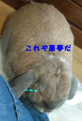 PHOTO084b.jpg