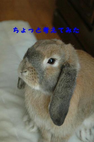 PHOTO098aa.jpg