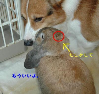 PHOTO101b.jpg