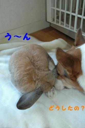 PHOTO109b.jpg