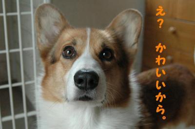 PHOTO143b.jpg