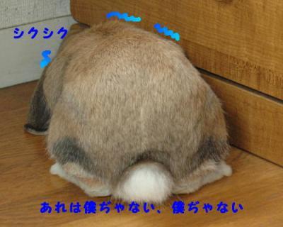 PHOTO165b.jpg