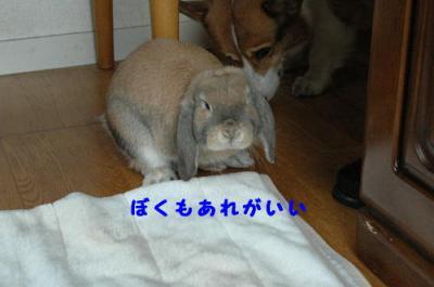 PHOTO184b.jpg