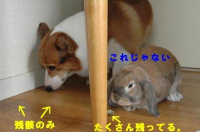 PHOTO187b.jpg