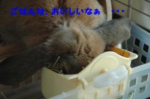 PHOTO241b.jpg