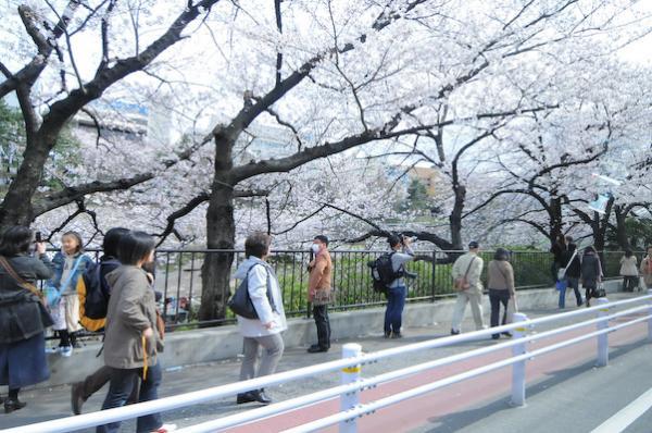 桜20080329-1