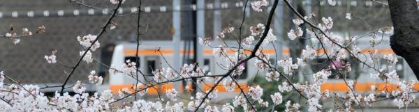 桜20080329-2