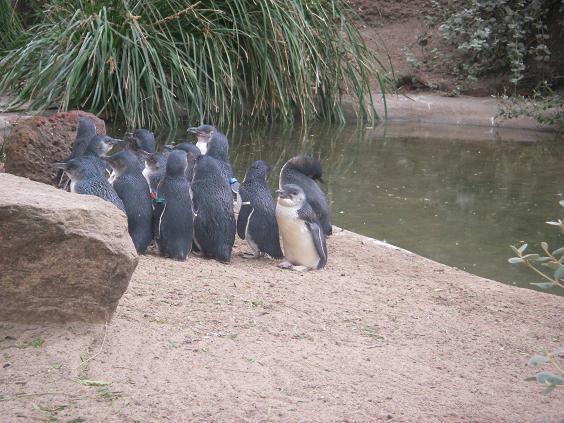 072607_penguin.jpg
