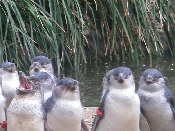 072707_penguin.jpg