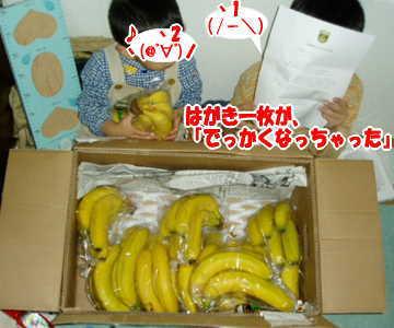 バナナが箱いっぱいに!