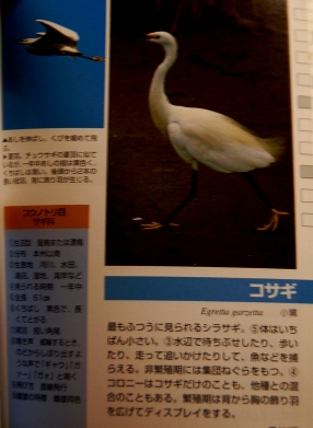 DSC_1320.jpg