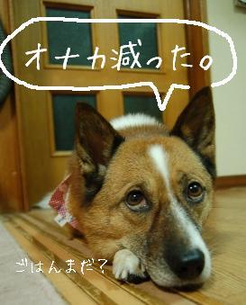 DSC_5061.jpg