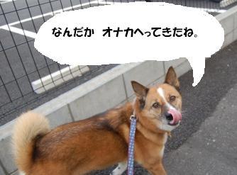DSC_5696.jpg