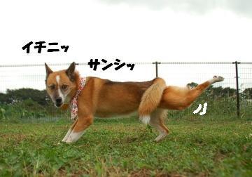 DSC_8731.jpg