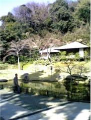 円覚寺 庭