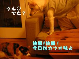 20070325230206.jpg