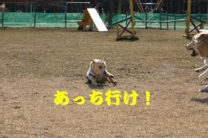 IMG_2124.jpg